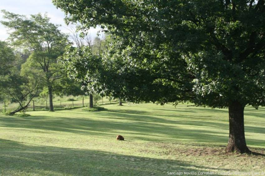hoyo_golf