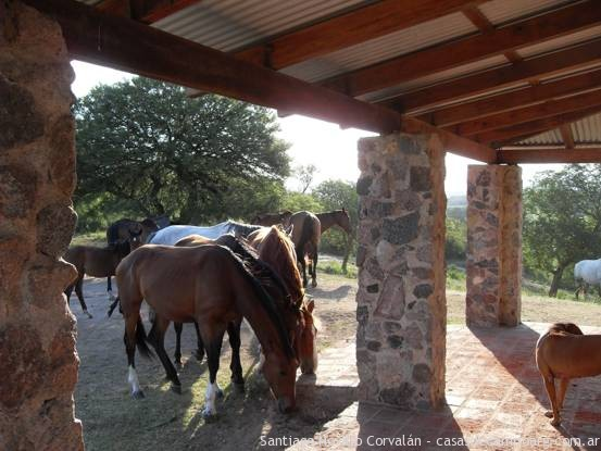 Equine Reproduction Center