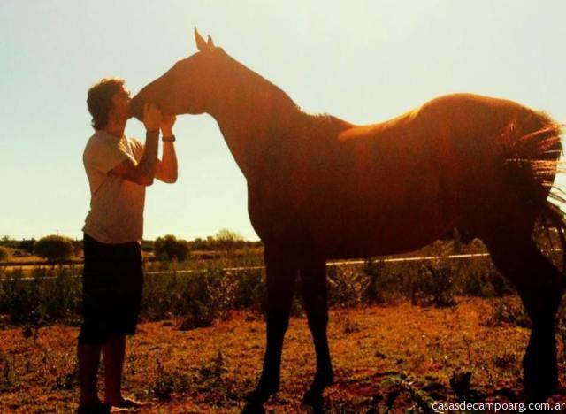 atardecer_caballo